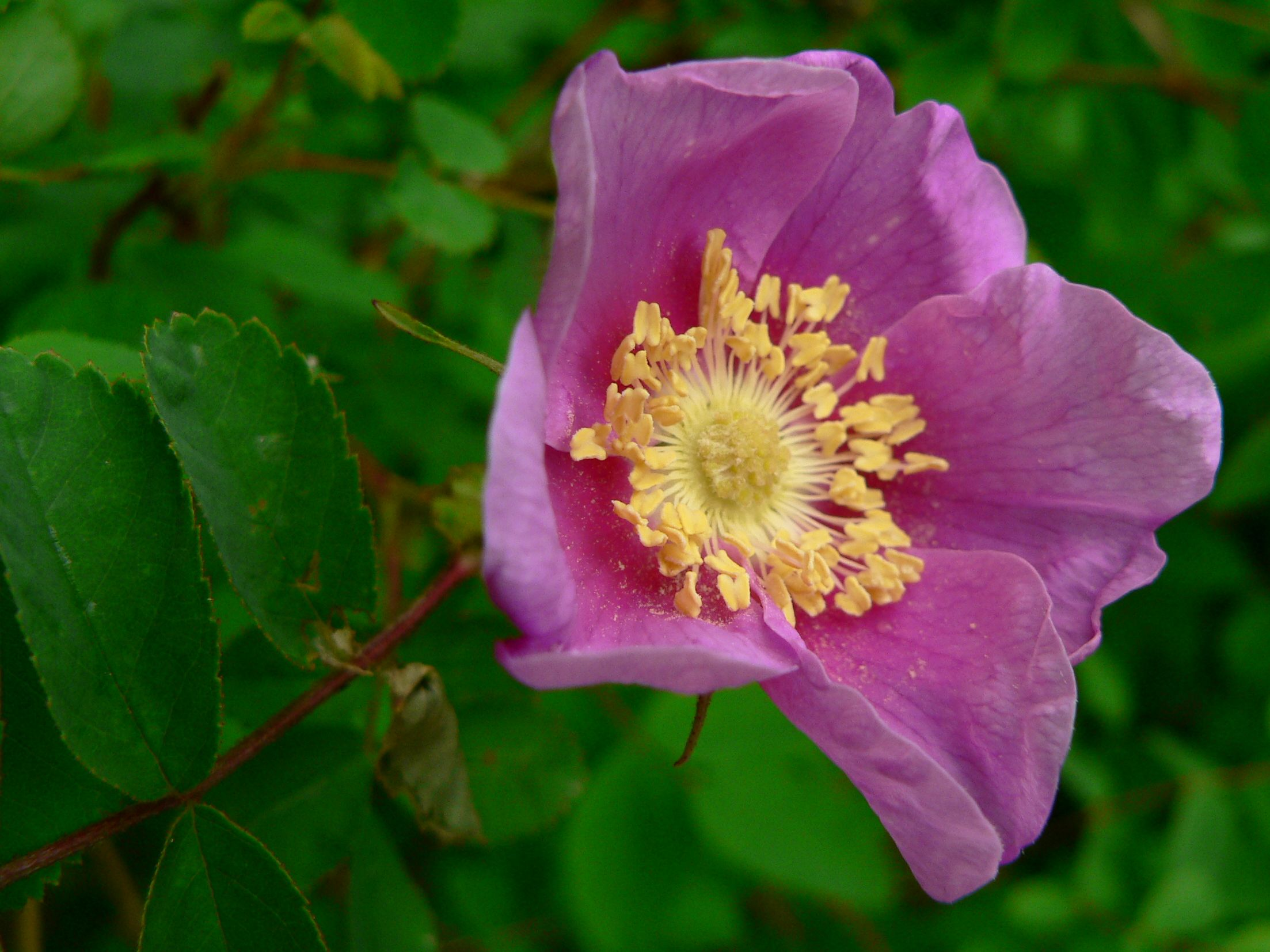 Planting for Pollinators: May