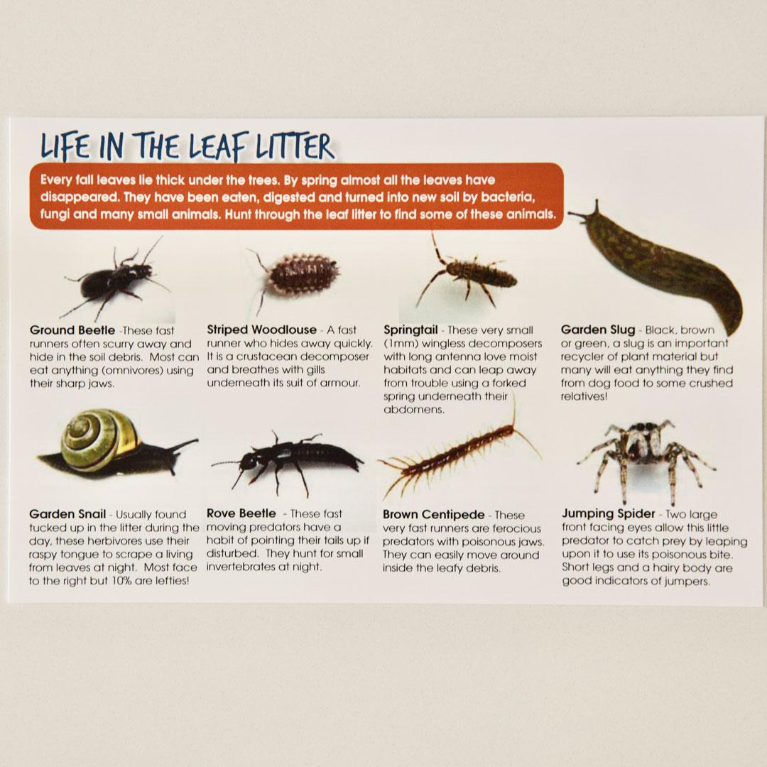 Bug Safari Cards