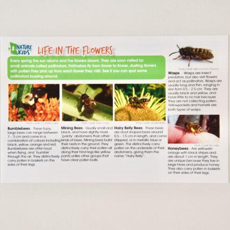 Life in the Flowers: Pollinator Safari Card